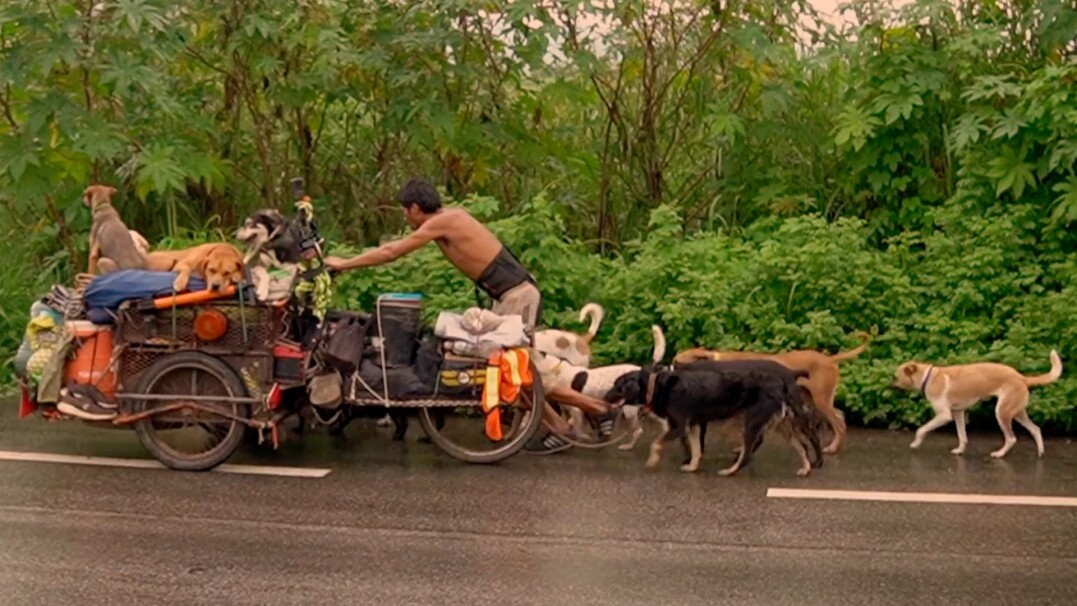 Wraz ze swoimi 14 psami przemierza Meksyk, by ratować ranne zwierzęta
