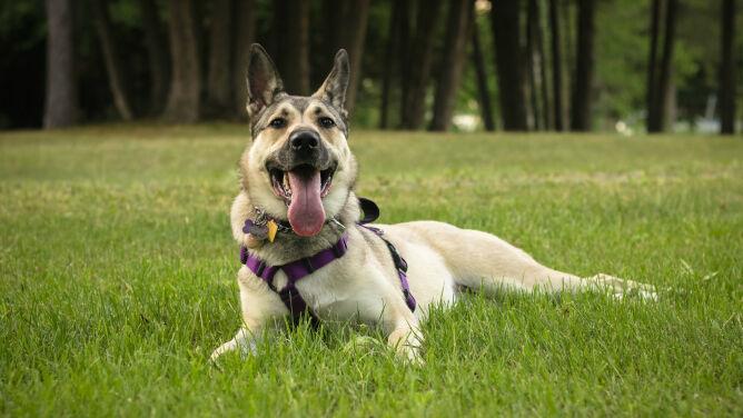 Do których parków narodowych wejdziecie z psami?