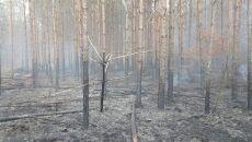 Pożar w polskim lesie (Michał Nowak/Lasy Państwowe)