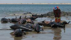 Na plaży w Namibii znaleziono martwe delfiny ciemne (Lüderitz Marine Research)