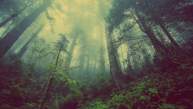 Sadzić nowe, nie wycinać starych. <br />Drzewa w walce ze zmianami klimatu