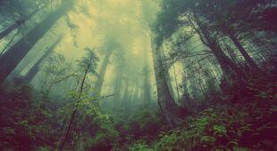 Lasy mogą zahamować zmiany klimatyczne